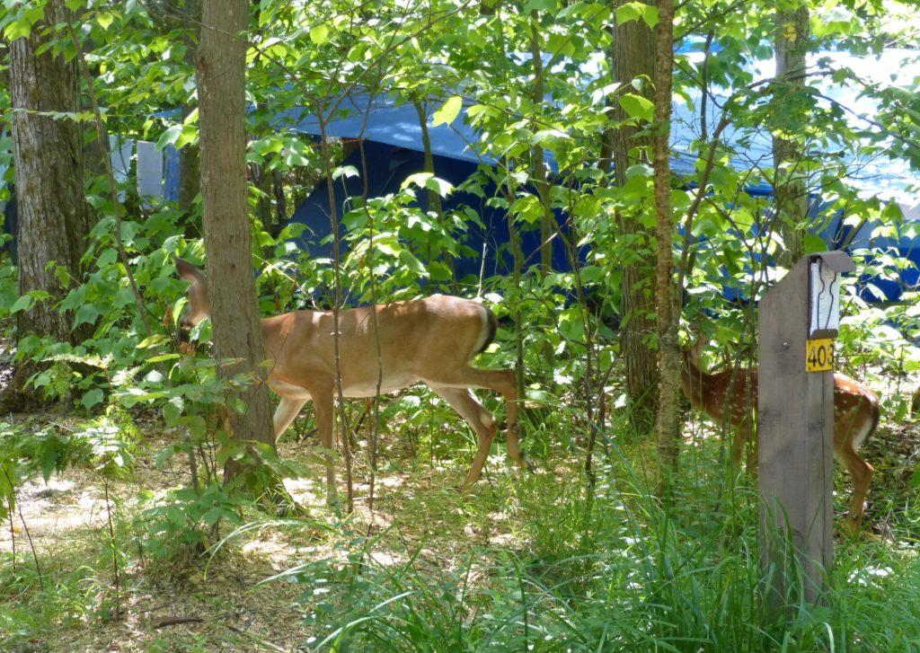 Klillbear Provicinial Park_Sonntagsspaziergang auf dem Campingplatz